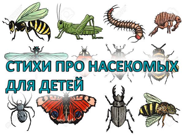 Стихи про насекомых для детей дошкольного возраста