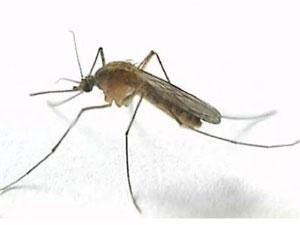 Стихи про насекомых для детей: комар