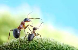 детские стихи про насекомых: муравей