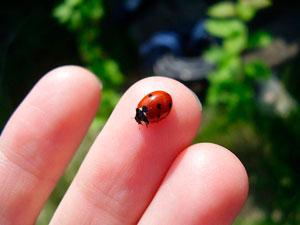 Стихи про насекомых для детей: божья коровка