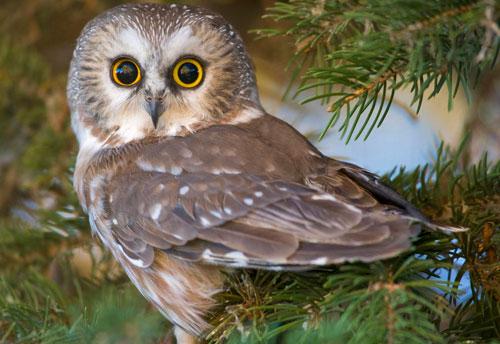 загадки про птиц для детей с ответом сова