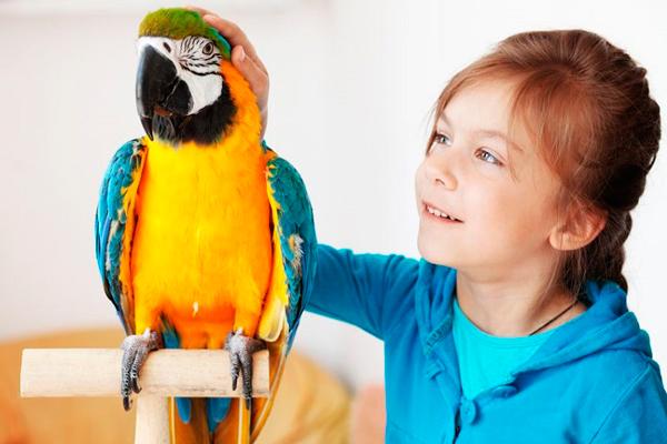 загадки про птицу попугай