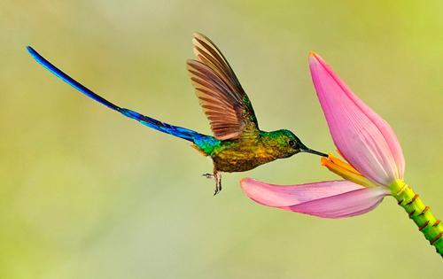 детские загадки про колибри