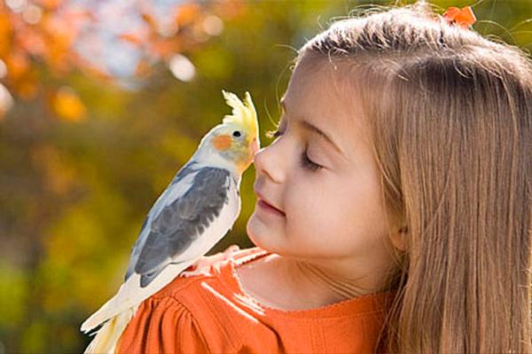 детские загадки про птиц: канарейка