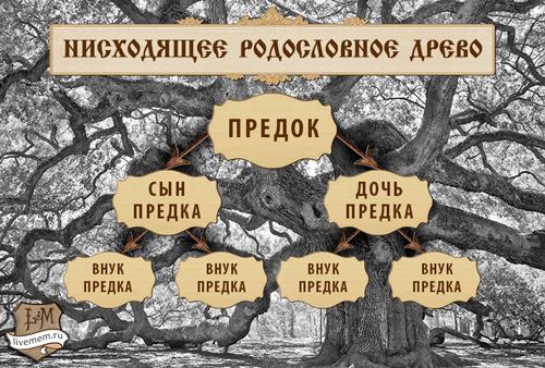 Как составить генеалогическое древо семьи: низходящее дерево