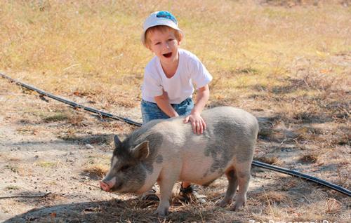 загадки про домашних животных для детей дошкольного возраста