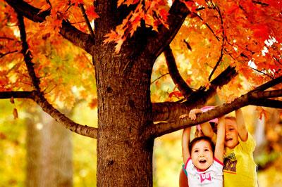 лучшие загадки о деревьях