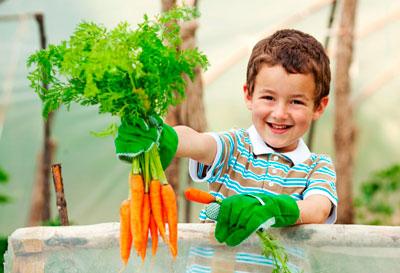 детские загадки про фрукты, овощи и ягоды для детского сада