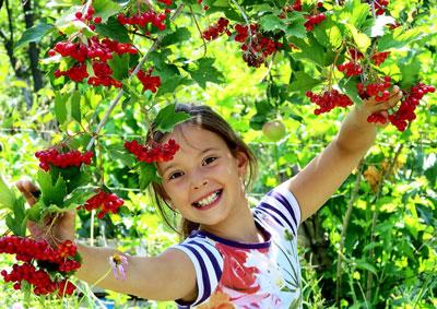 Загадки про фрукты, овощи и ягоды для детей школьного возраста