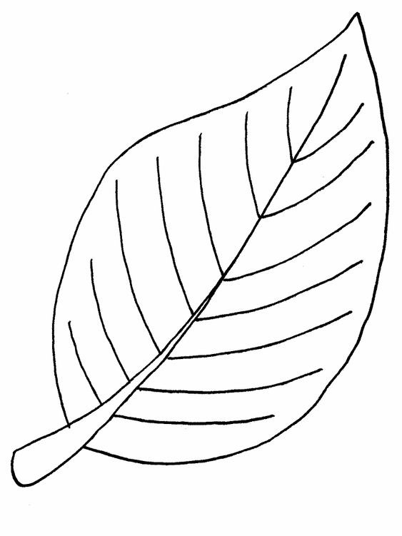 Шаблоны листьев для вырезания из бумаги для детей 2-3 лет
