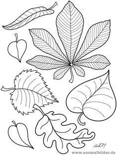 Шаблоны листьев для вырезания из цветной бумаги