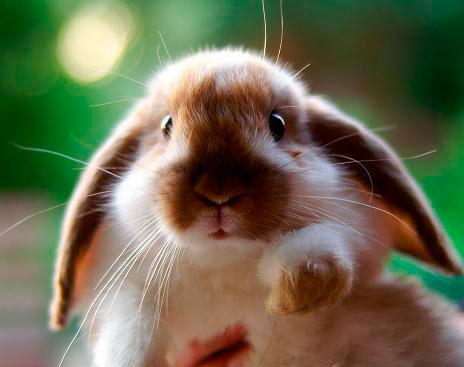 50 загадок про зайца для детей