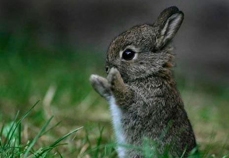 Загадки про зайца для детского сада