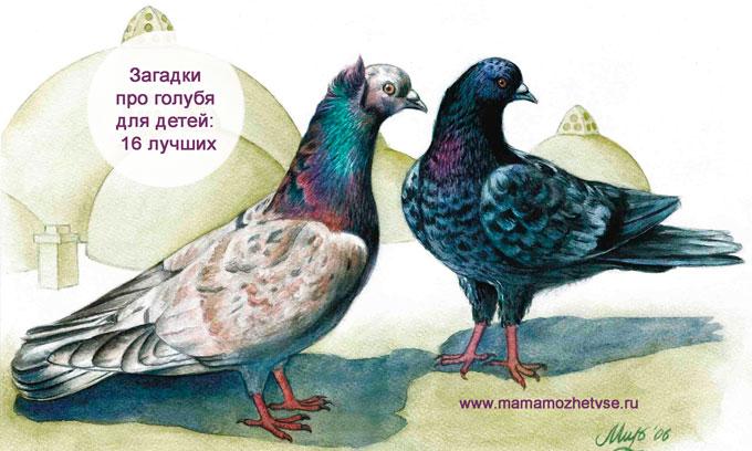 Загадки про голубя для детей в школу и сад