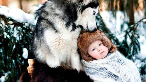 детские стихи про волка для школы