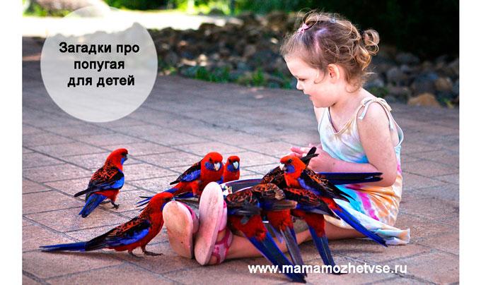 Загадки про попугай для детей