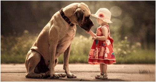 Загадки про собаку для детей 3-5 лет