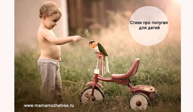 Стихи про попугая для детей