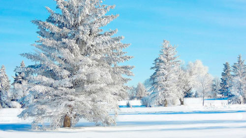 Стихи про иней на деревьях для детей