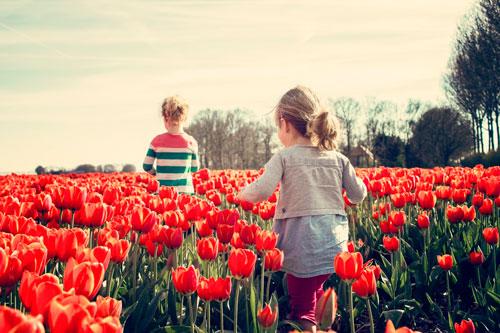 Интересные загадки про тюльпан для детей