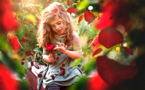 Красивые стихи про розы
