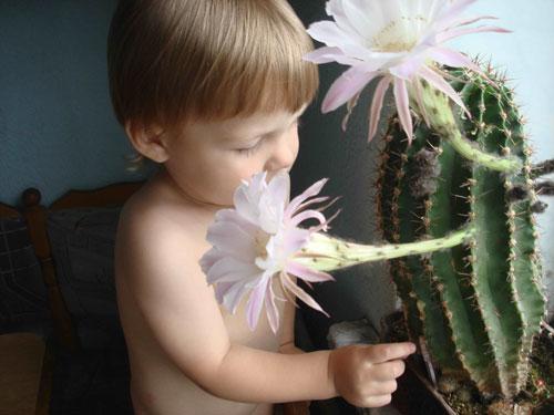 Интересные загадки про кактус для детей