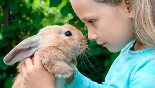 Красивые стихи про зайца для детей
