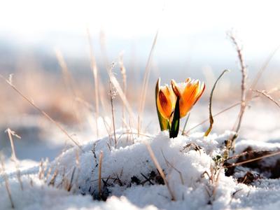 приметы погоды на весну: месяц март