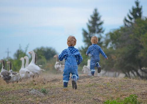 Интересные загадки про гуся для детей 5-7 лет