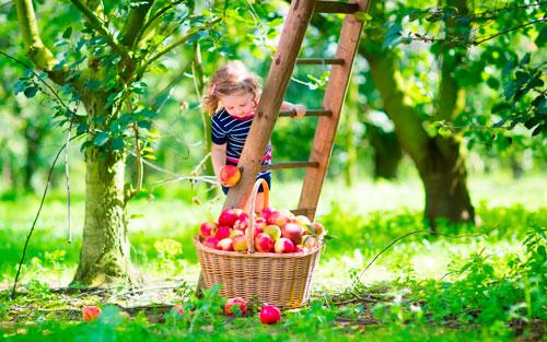 Интересные загадки про яблоки для детей