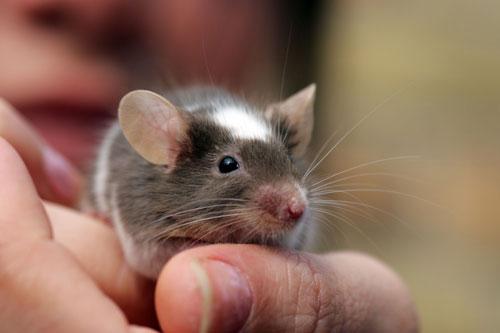 Интересные загадка про мышку для детей