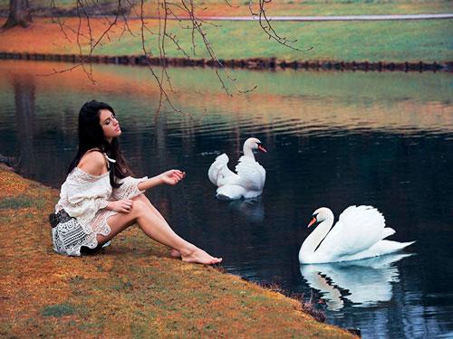 Красивые стихи про лебедей