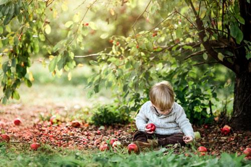 Загадки про яблоки для детей