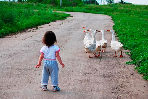 Интересные загадки про гуся для детей