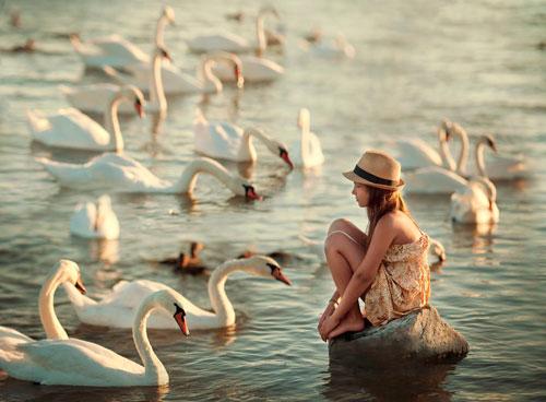 Стихи про лебедей для детей