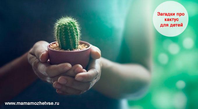 Загадки про кактус для детей