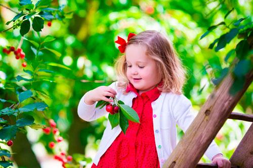 Лучшие загадки про вишню для детей