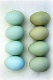 оригинально красим яйца на Пасху с помощью натуральных красителей из зелени