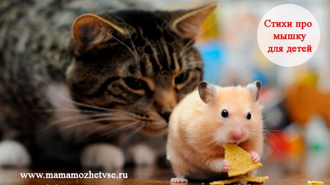 Стихи про мышку для детей