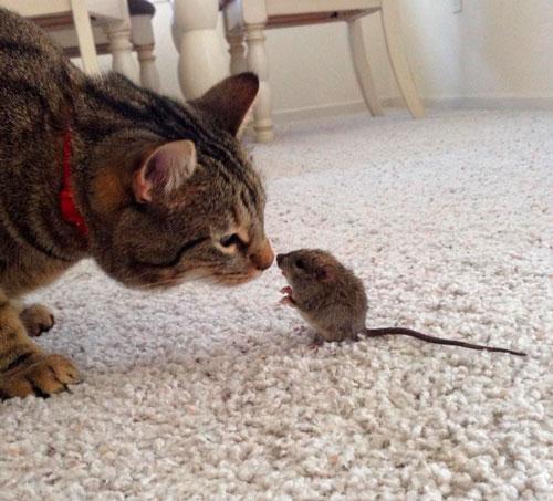 Лучшие стихи про мышку для детей