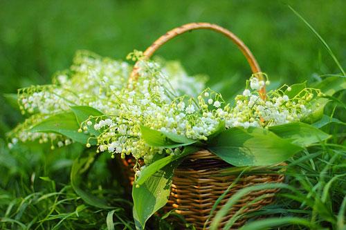 Красивые стихи про ландыш и весну для детей
