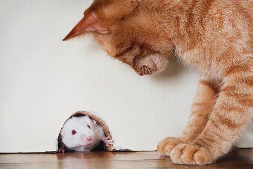 Красивые стихи про мышку для детей