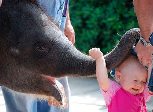 Короткие загадки про слона