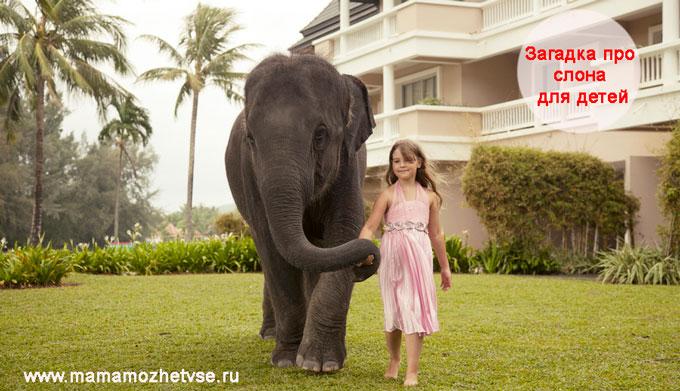 Загадка про слона для детей