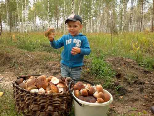 Интересные загадки про грибы для детей 5-7 лет с ответами