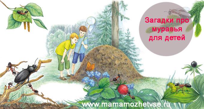 Загадки про муравья для детей