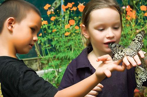 Загадки про бабочку с ответами для детей