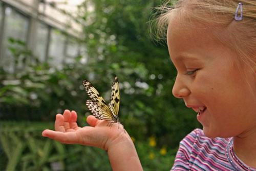 Стихи про бабочку с ответами для детей