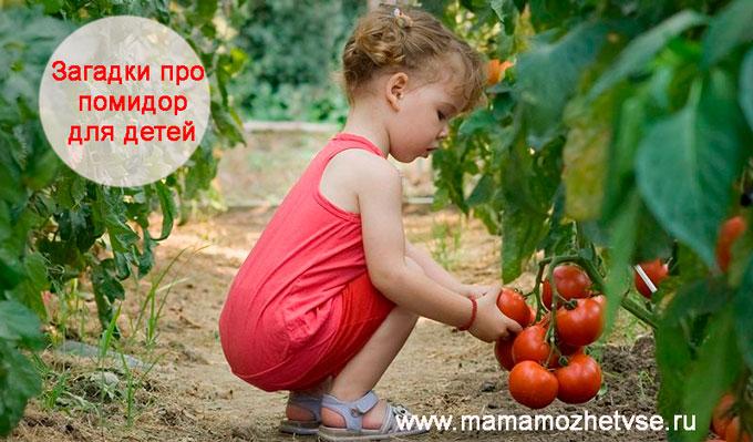 Загадки про помидор для детей