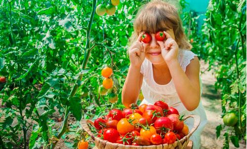 Загадки про помидор с ответами для детей